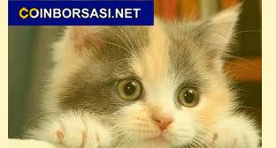 ponçik kedi