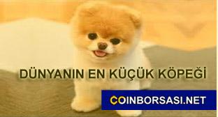 ponçik köpek